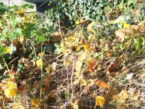 vinegar kills poison ivy
