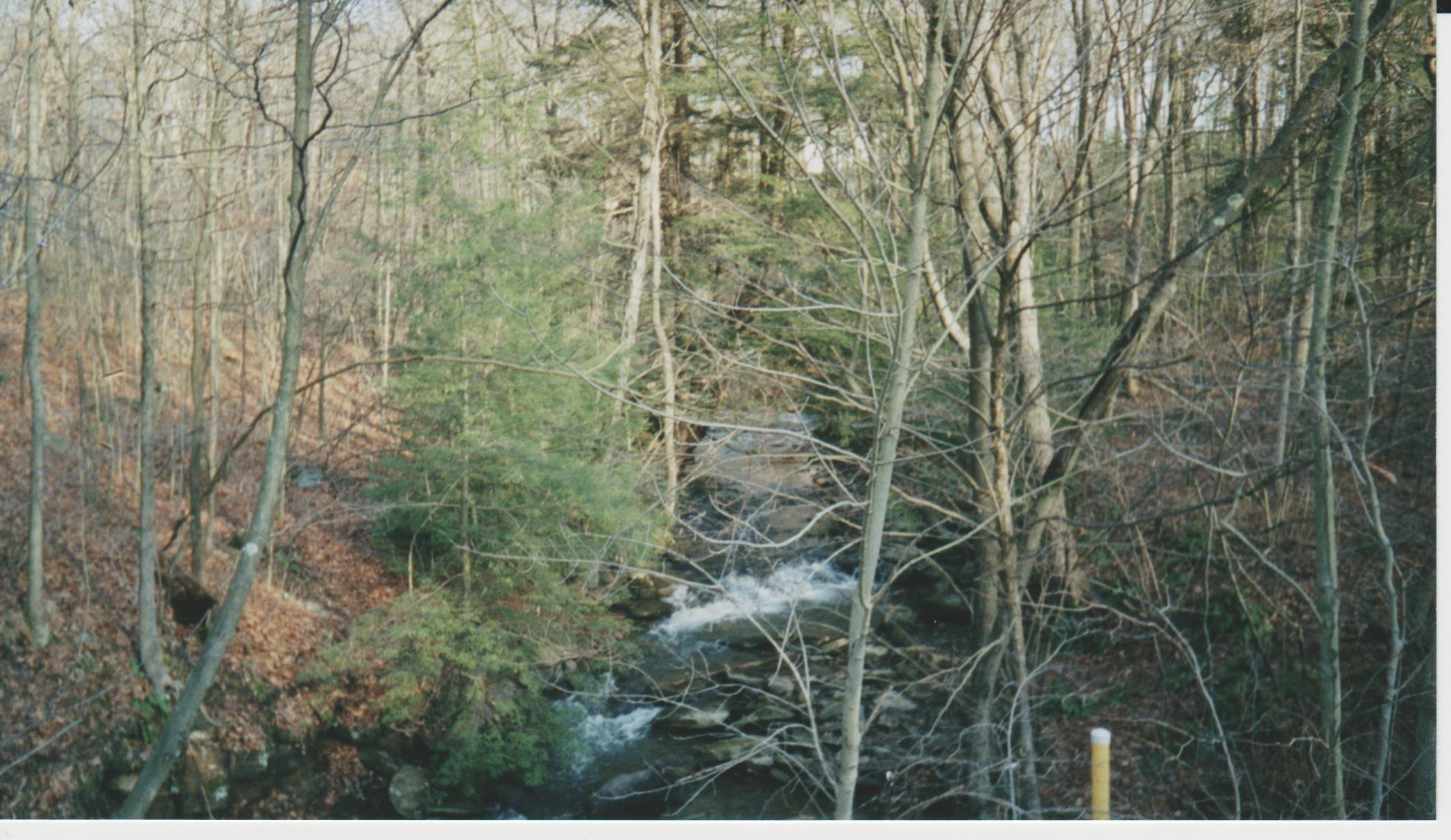 bare-trees-creek-flowing-over-rocks