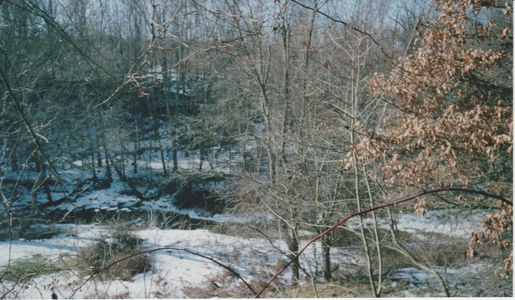Creek and woods in Winter