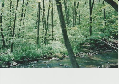 Little Buffalo Creek and woods