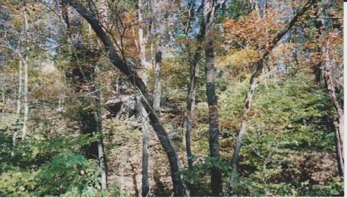 Boulder in Fall Scene