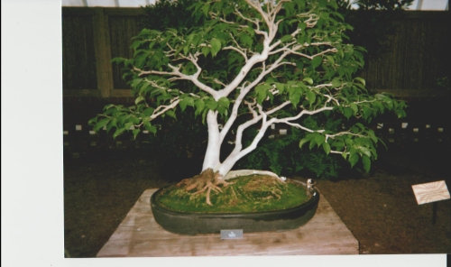 Bonsai and miniature figure