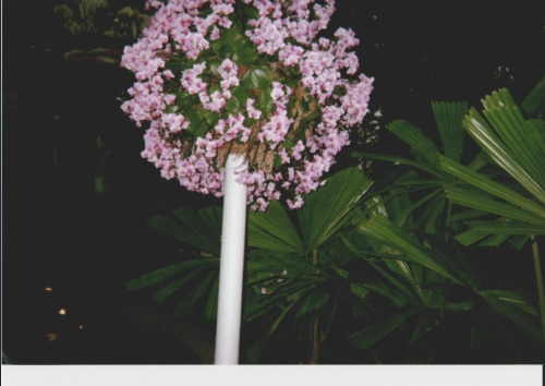 lollipop-orchid-at-phipps.jpeg
