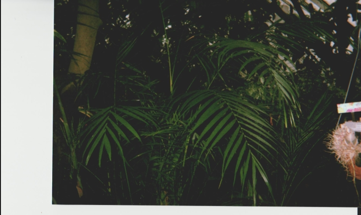 More palms at Phipps