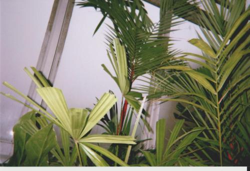 More Palms,2