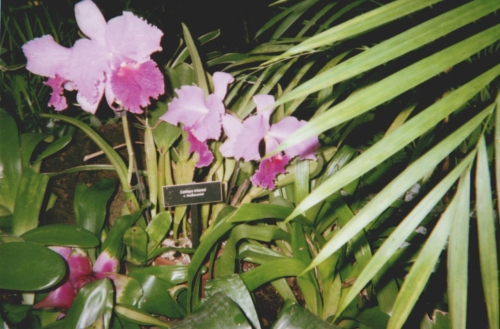 orchids-at-phipps.jpeg