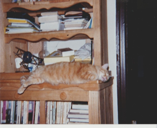 Shorty sleeping on the wooden bookcase