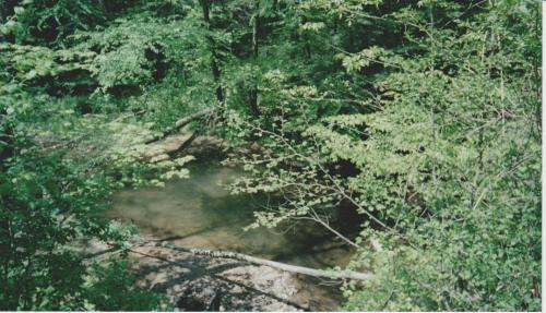 A Shaded Pool in the Creek