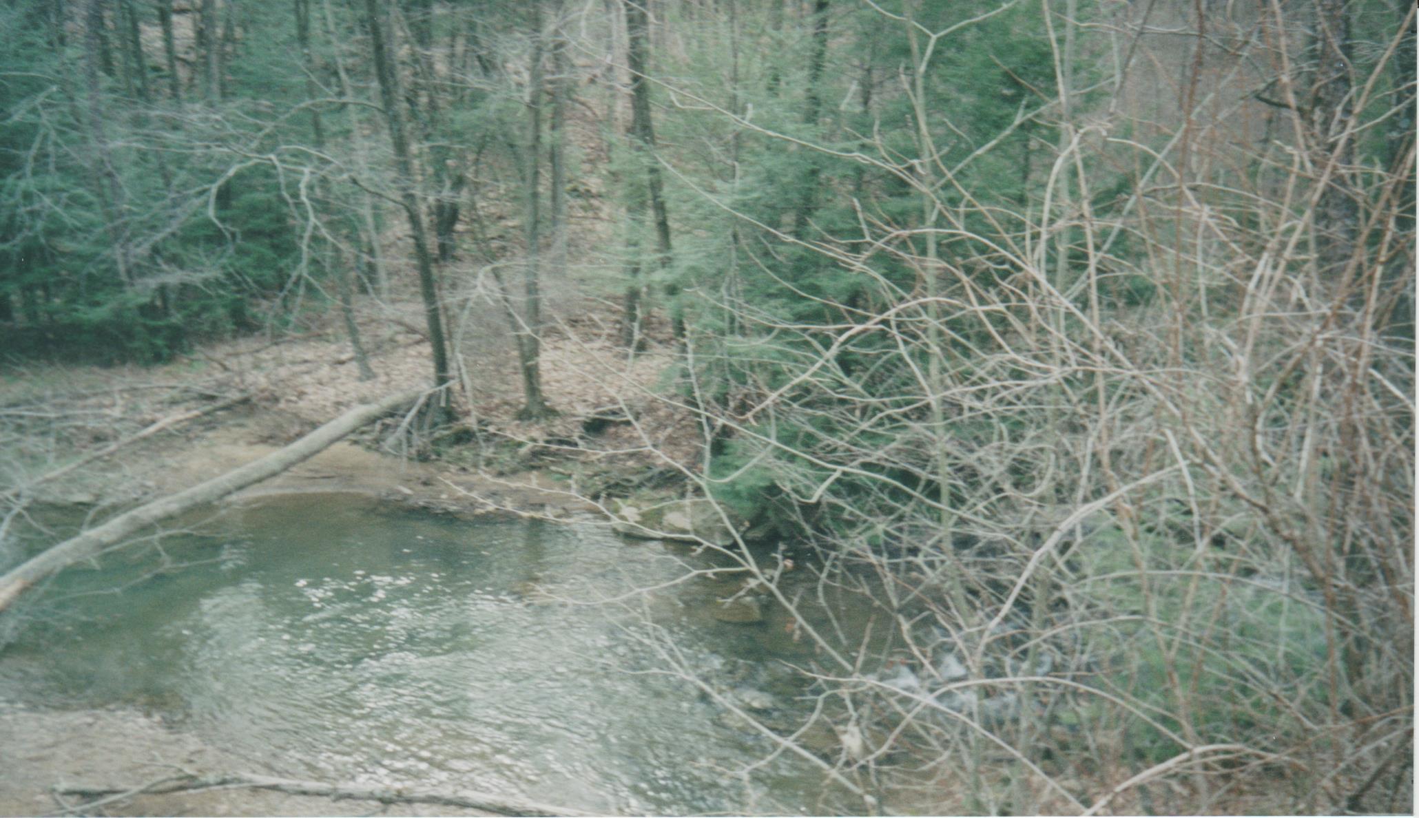 Creek at bridge (where we feed the fish)