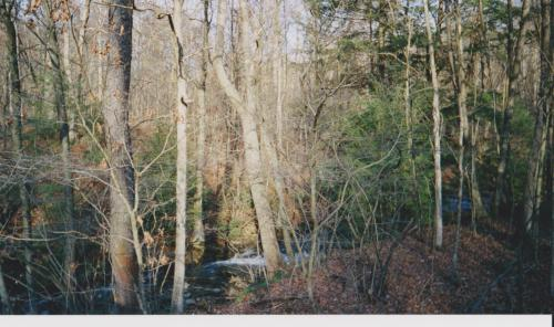 Creek and young trees