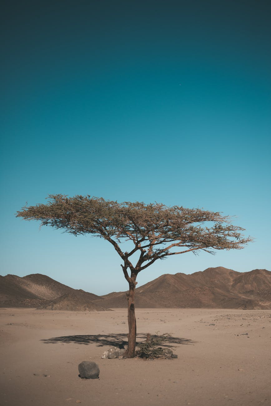 tree at the desert