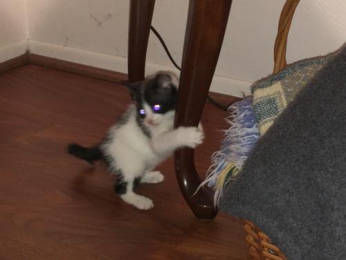 Duchess grabbing table leg